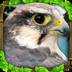 Falcon Simulator Mod apk file