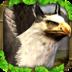 Griffin Simulator Mod apk file