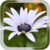 Summer Flower Live Wallpaper apk file