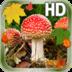 Leaves Mushroom Hd LWP apk file