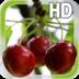 Cherry LWP Free apk file