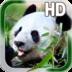 Panda Live Wallpaper apk file