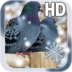 Birds Winter Live Wallaper apk file