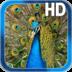 Birds Peacock LWP Free apk file