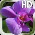 Orchids Live Wallpaper apk file
