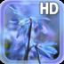 Blue Flower Live Wallpaper apk file