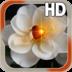 Heart Rose Live HD apk file
