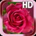 Rose Love Live Wallpaper apk file