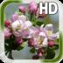 Spring Flower Live Wallpaper apk file