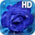 Rose Drops Live Wallpaper apk file