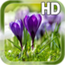 Spring Live Wallpaper apk file