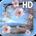 Sakura Live Wallpaper apk file
