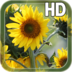 Sunflower Live Wallpaper apk file