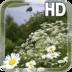 Chamomile Field Live Wallpaper apk file