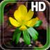 Spring Flower LWP apk file