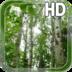 Birch Forest LWP apk file