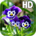 Pansy flowers Live Wallpaper apk file