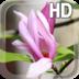 Magnolia Flower LWP apk file