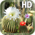 Cactus Flowers Live Wallpaper apk file