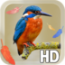 Bird Feathers LWP apk file