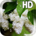 Flower Lilac Drops LWP apk file