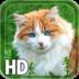 Cat Live Wallpaper apk file
