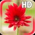 Flower Live Wallpaper apk file