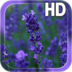 Lavender Flowers LWP apk file