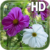 Summer Flowers Live HD apk file