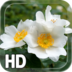 Flower Nature apk file