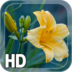 Yellow Flower LWP apk file