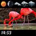 Flamingo Clock And Weather apk file