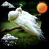 Exotic Birds Weather Clock apk file